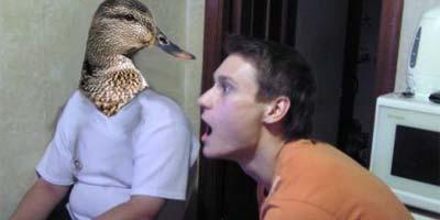 Anatidaephobia - боязнь того, что за вами следят утки